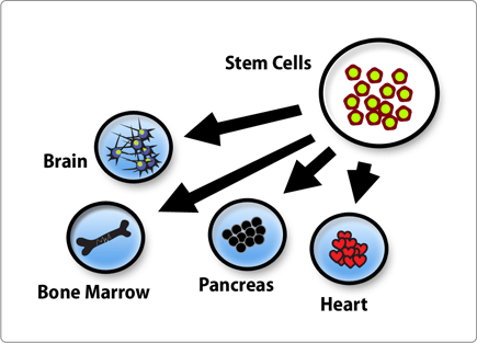 Stemcell Diagram